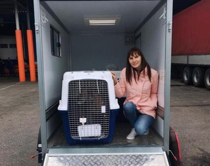 Зоотакси, такси для животных (собак и кошек)
