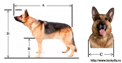 Контейнер для перевозки собаки