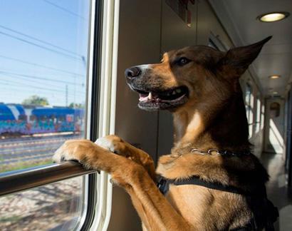Перевозка собак на поезде