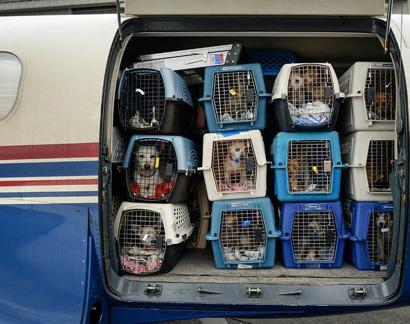 Можно ли в самолете перевозить котов